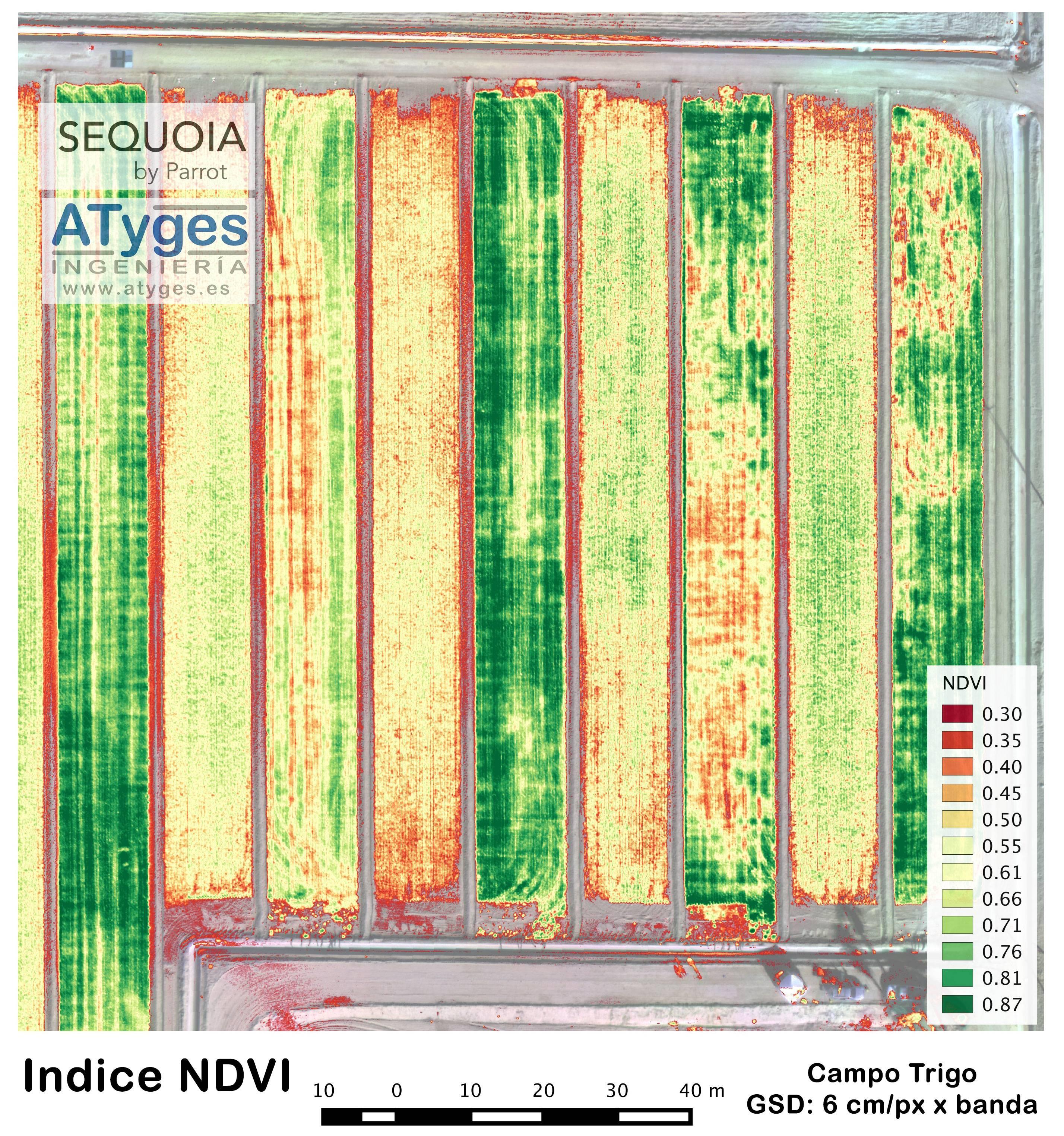 Mapa de NDVI de campo de trigo